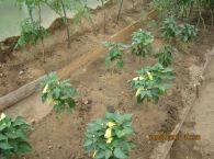 Подробнее: Наш огород